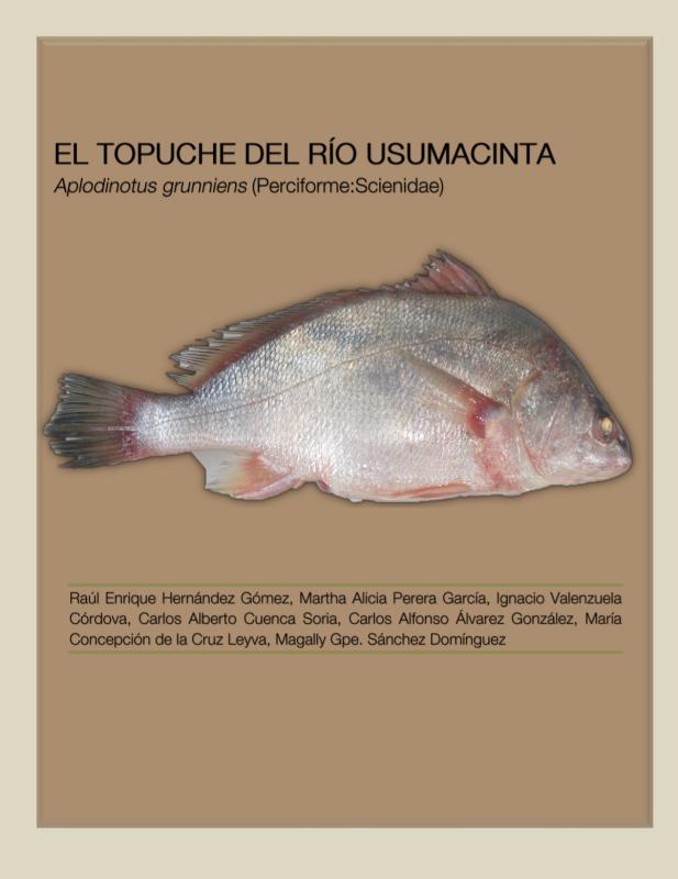 Cubierta para El topuche del río usumacinta: Aplodinotus grunniens (Perciforme: Scienidae)